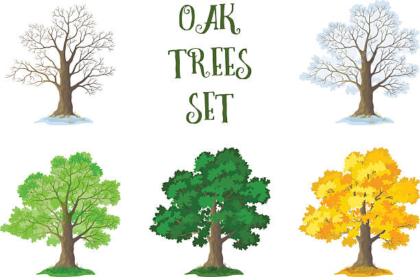 Royalty Free Tree No Leaves Clip Art, Vector Images ...