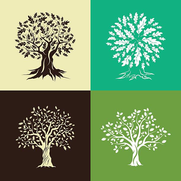 Vector Illustration Tree: Best Oak Tree Illustrations, Royalty-Free Vector Graphics
