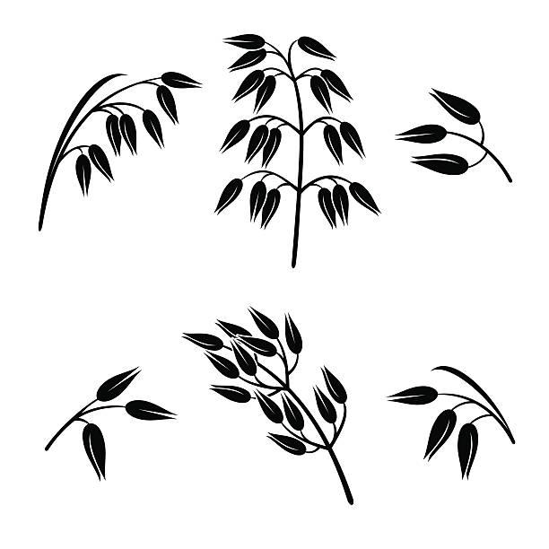 ilustrações de stock, clip art, desenhos animados e ícones de oats set. vector - ilustrações de oats
