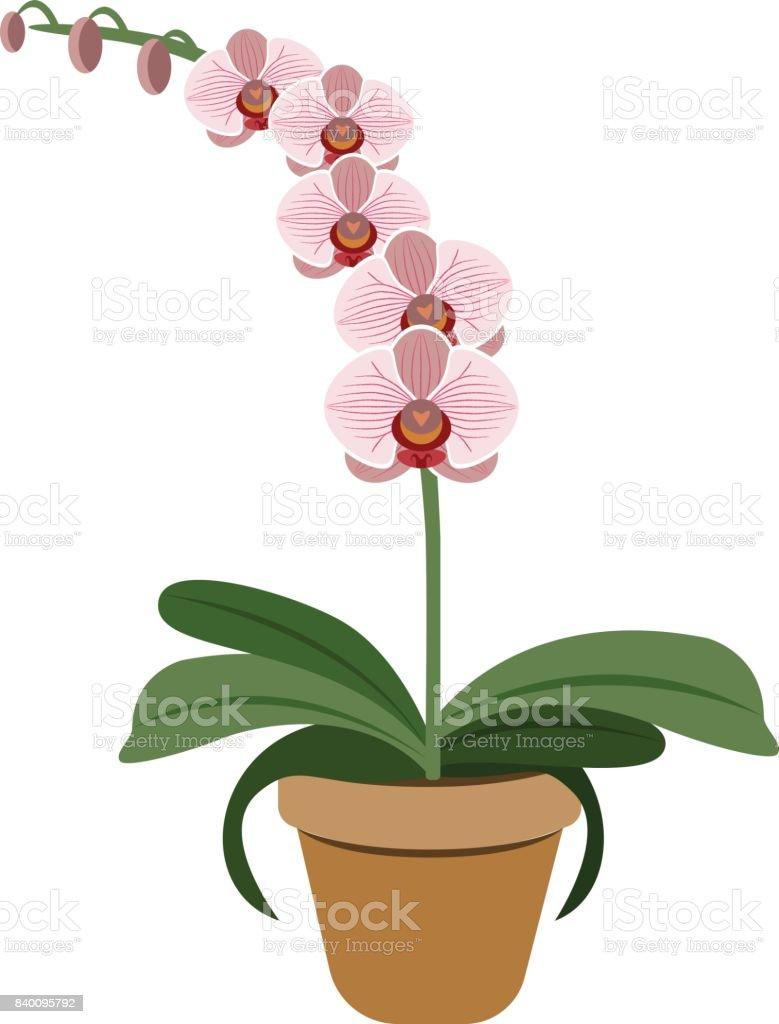 Objet Orchidee Rose En Pot De Fleur Vector Cliparts Vectoriels Et