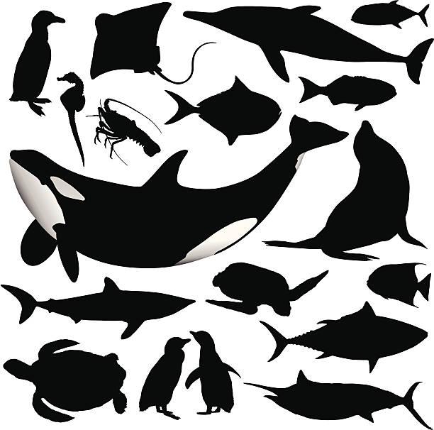 stockillustraties, clipart, cartoons en iconen met ocean animal silhouettes - pinguins swimming