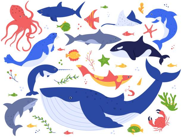 Ocean animals. Cute fish, orca, shark and blue whale, marine animals and sea creatures illustration vector set. Undersea world pack. Seaweed, algae and water plants clipart collection Ocean animals. Cute fish, orca, shark and blue whale, marine animals and sea creatures illustration vector set. Seaweed, algae, starfish and water plants isolated on white background beluga whale stock illustrations