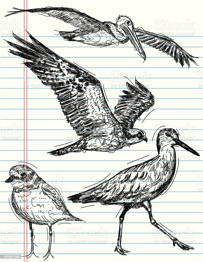 オーシャン鳥のスケッチ - いたずら書きのベクターアート素材や画像を