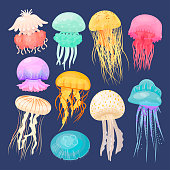 Ocean jellyfish bright set on dark blue. Beautiful marine coelenterate with a jelly like bell, transparent and colorful sea life. Vector flat style cartoon illustration isolated on blue background