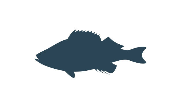 ocean perch silhouette. isolated ocean perch on white background - redfish stock illustrations, clip art, cartoons, & icons