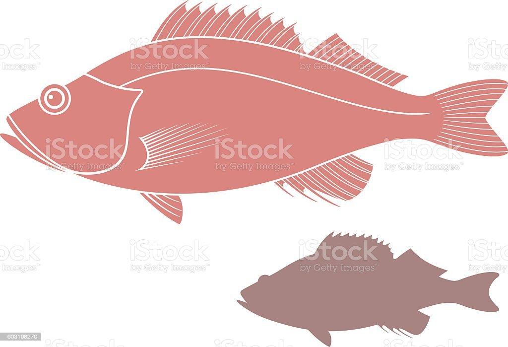 Ocean perch vector art illustration