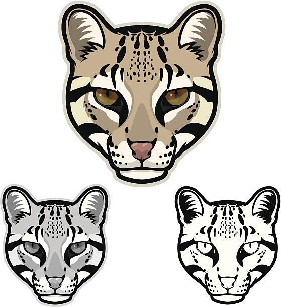 illustrazioni stock, clip art, cartoni animati e icone di tendenza di ocelot faccia - ocelot