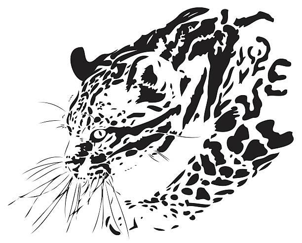 illustrazioni stock, clip art, cartoni animati e icone di tendenza di ocelot (leopardus pardalis) illustrazione - ocelot