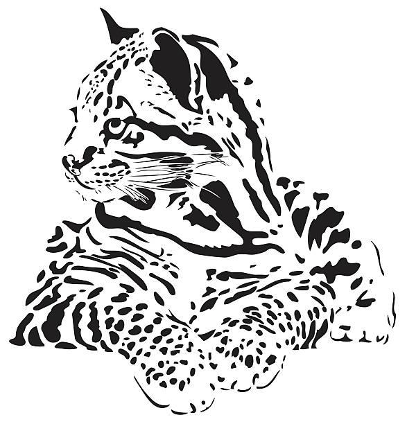 illustrazioni stock, clip art, cartoni animati e icone di tendenza di ocelot illustrazione - ocelot