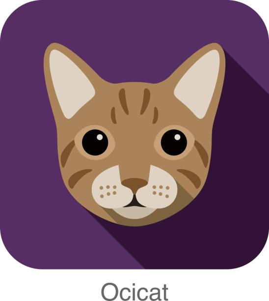 illustrazioni stock, clip art, cartoni animati e icone di tendenza di ocicat cat, gatto di razza faccia fumetto icona di design piatto - ocicat
