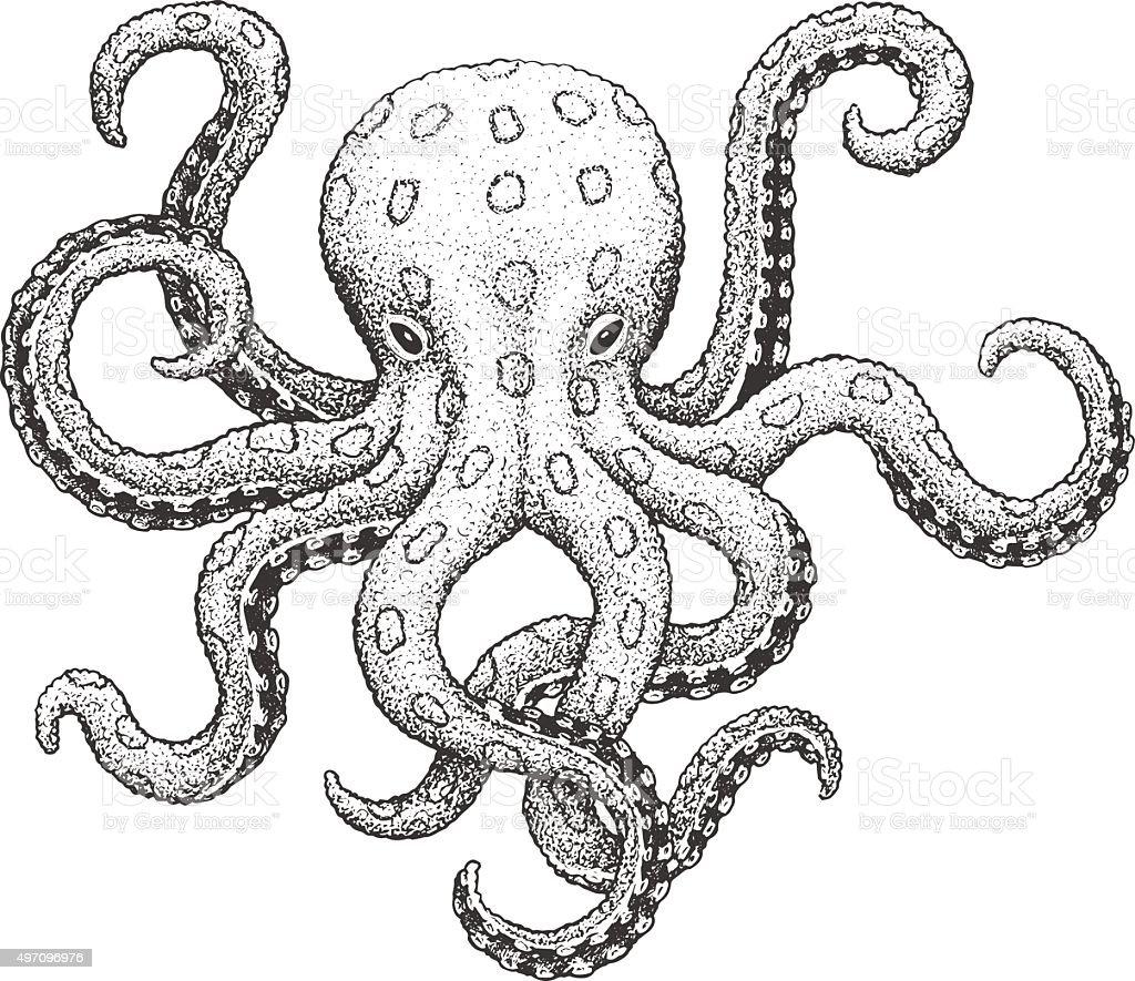 Octopus Engraving Illustration vector art illustration