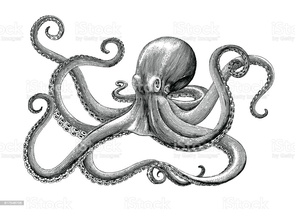 octopus hand drawing vintage engraving illustration on