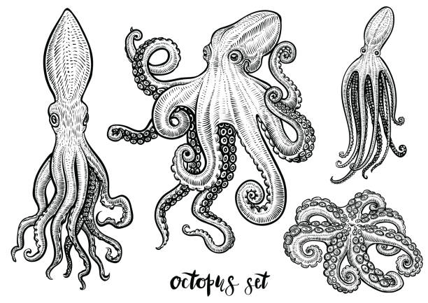 Octopus hand drawn vector illustrations. Black engraving sketch isolated on white. vector art illustration