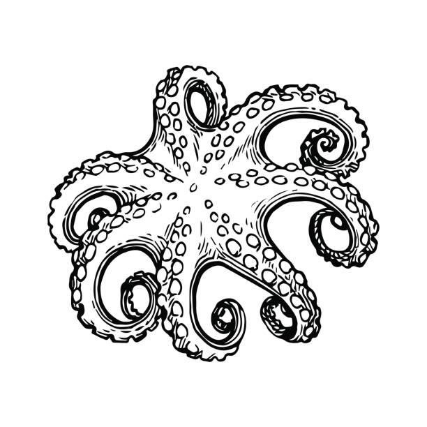 Octopus Ink Defense Drawing