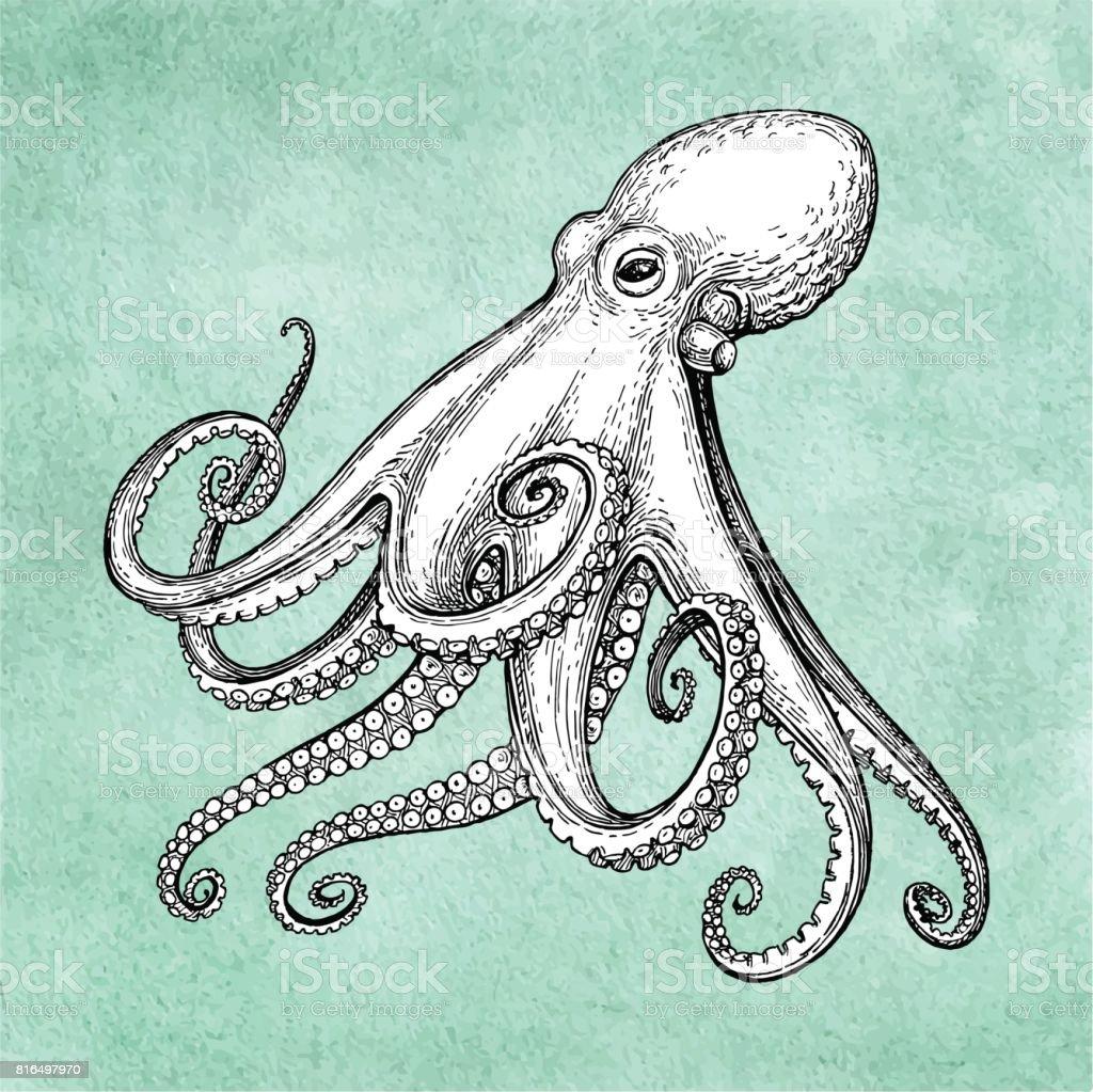 Octopus ink sketch vector art illustration