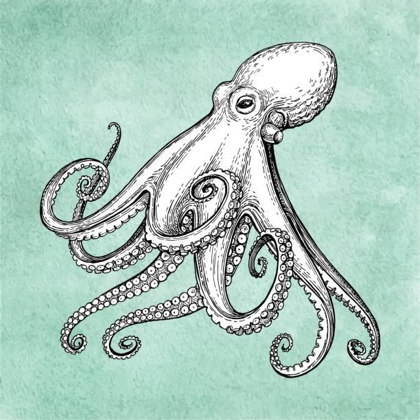 octopus ink sketch - octopus stock illustrations