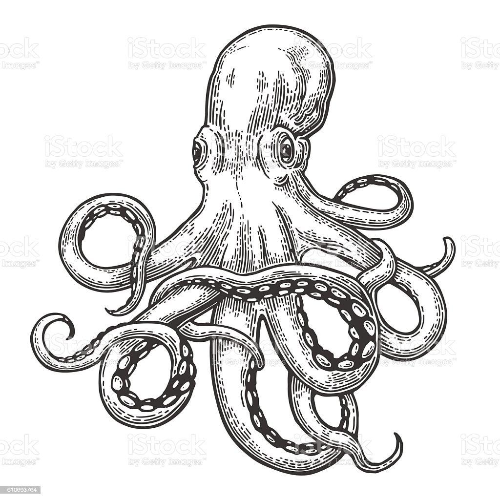 Octopus. Sea Monster octopus sea monster vecteurs libres de droits et plus d'images vectorielles de animal invertébré libre de droits
