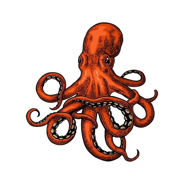 octopus. sea monster - octopus stock illustrations
