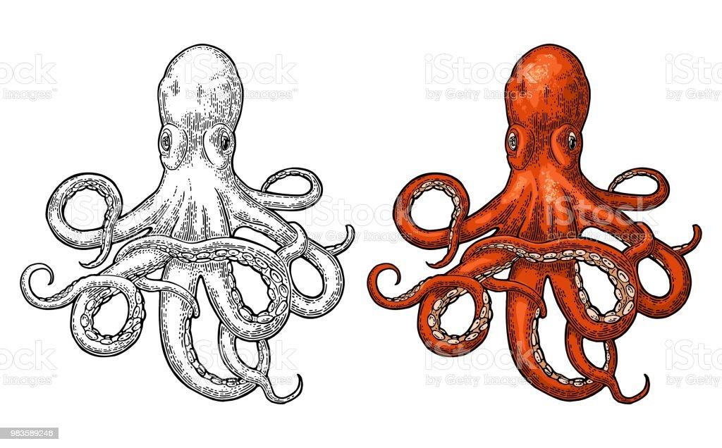 Oktopus. Seeungeheuer - Lizenzfrei Aquatisches Lebewesen Vektorgrafik