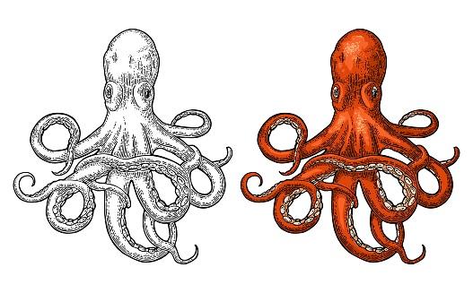 Oktopus Seeungeheuer Stock Vektor Art und mehr Bilder von Aquatisches Lebewesen