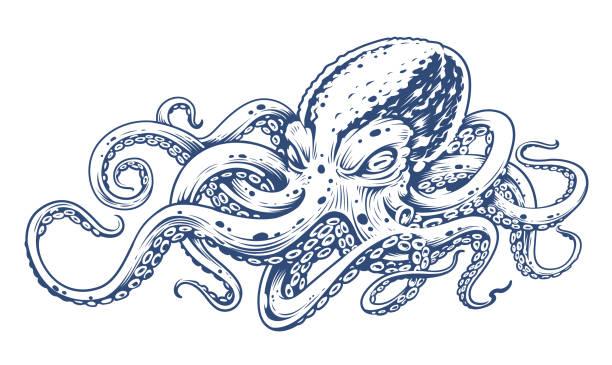 krake vintage vektorgrafiken - krake cephalopode stock-grafiken, -clipart, -cartoons und -symbole