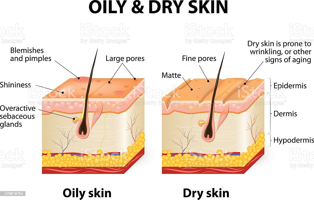 Oily & dry skin vector art illustration