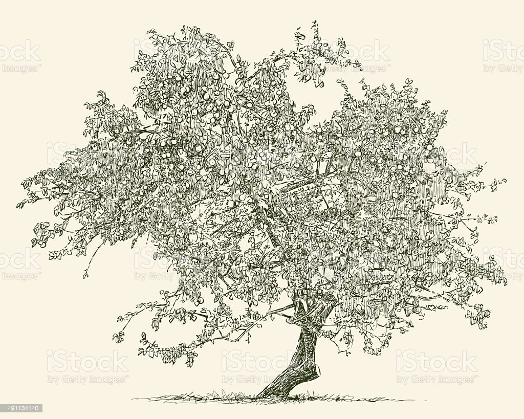 old apple tree vector art illustration