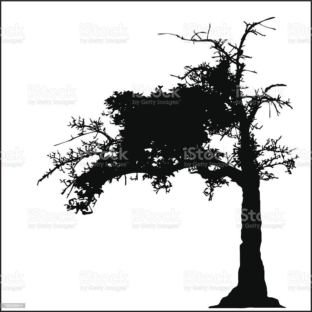 Old Tree vector art illustration