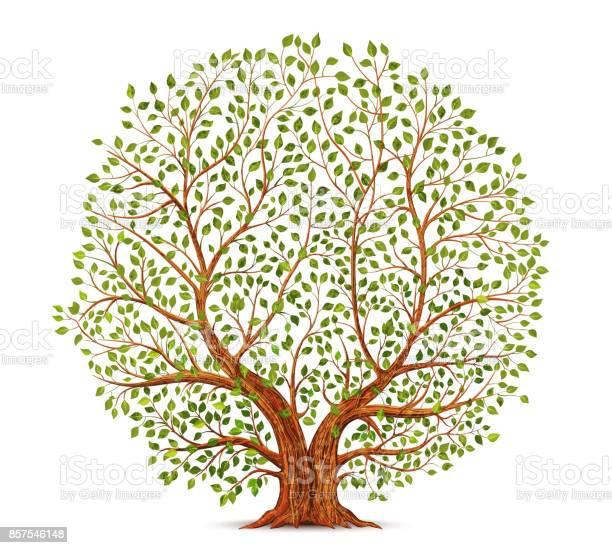 Old tree vector illustration vector id857546148?b=1&k=6&m=857546148&s=612x612&h=v4evtnsxp0u0 trk8lxa3tg feboypgdi58ll3l849g=