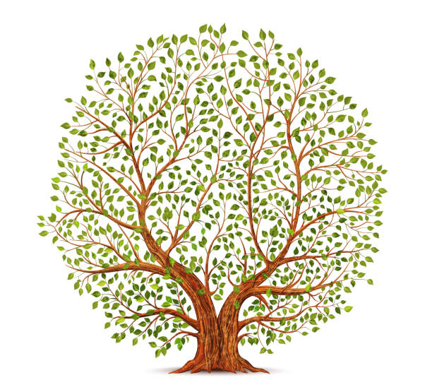 Old tree vector illustration Old tree vector illustration fruit clipart stock illustrations