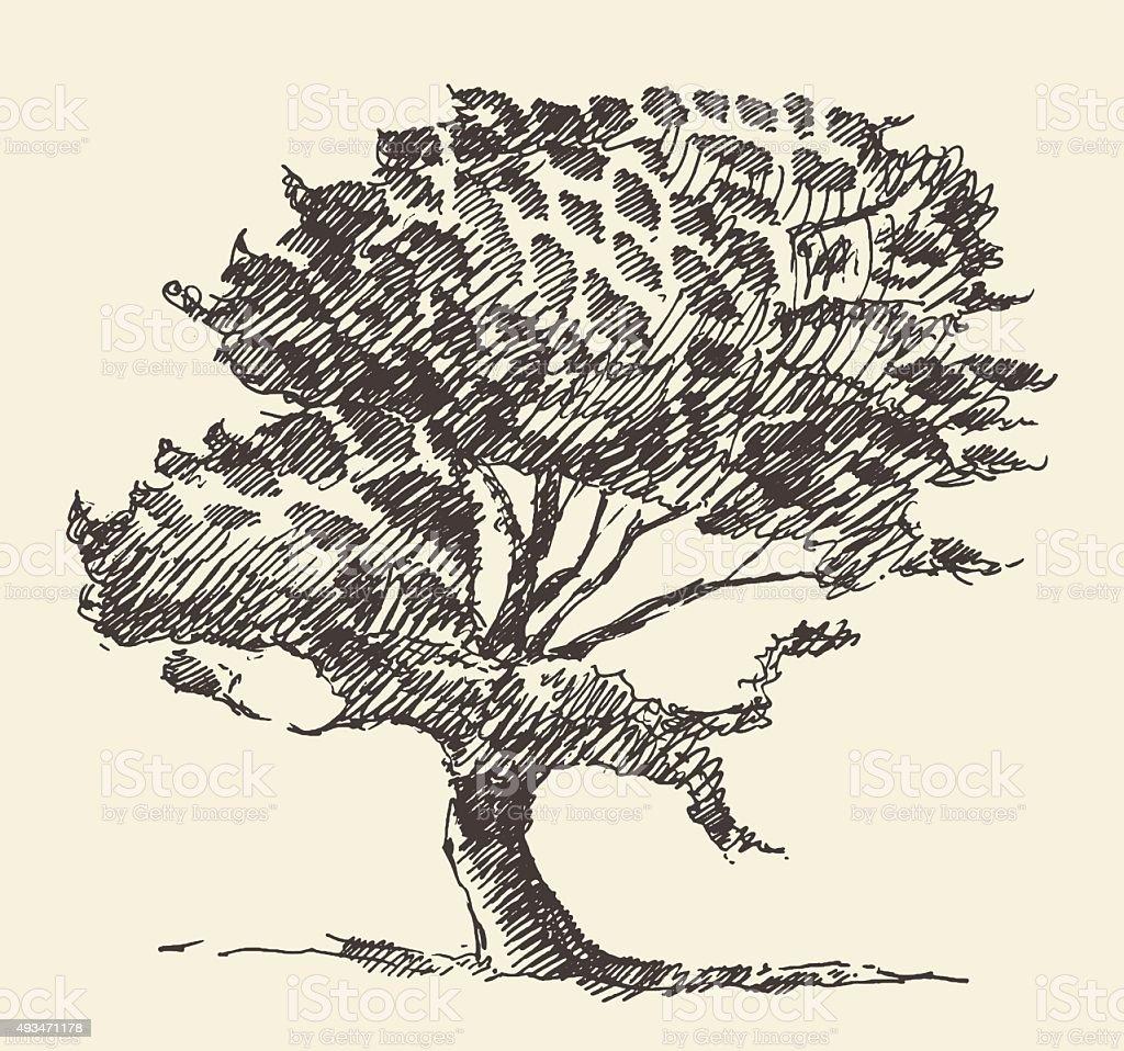 Old Tree Vintage Illustration Hand Drawn Sketch Stock Illustration Download Image Now Istock
