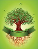 Old tree with roots and  green banner. High Resolution JPG,CS5 AI and Illustrator 0.8 EPS included.