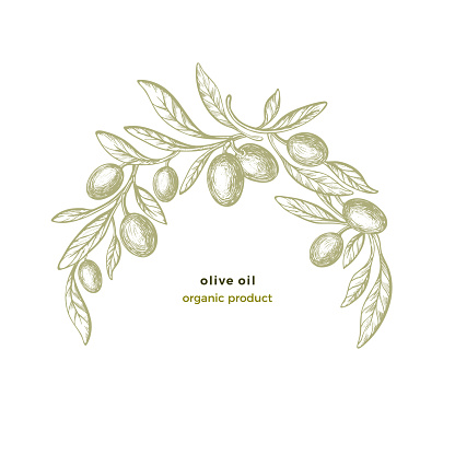 Olive arc pattern. Vector circle frame. Bio food