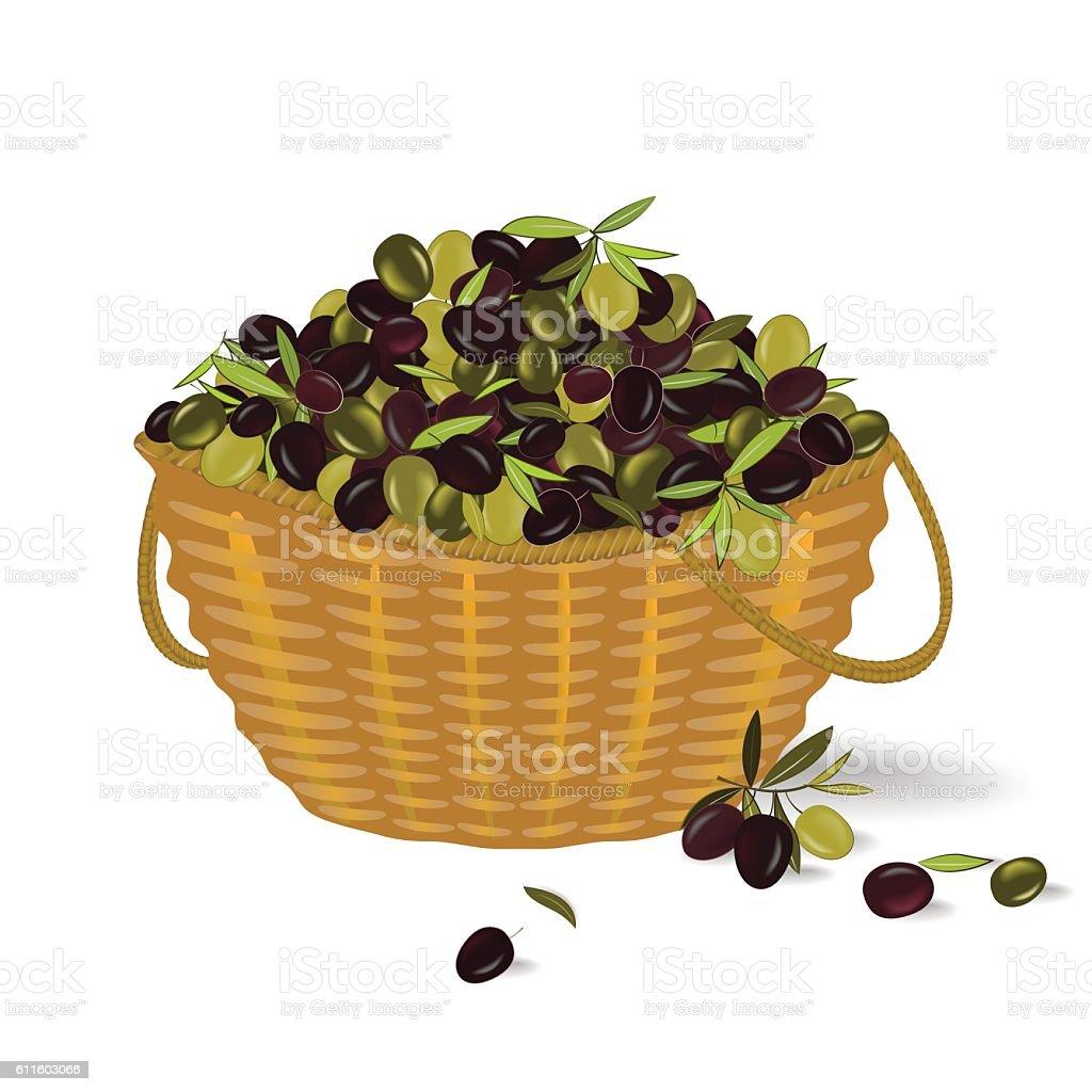 Olive basket. Vector illustration vector art illustration