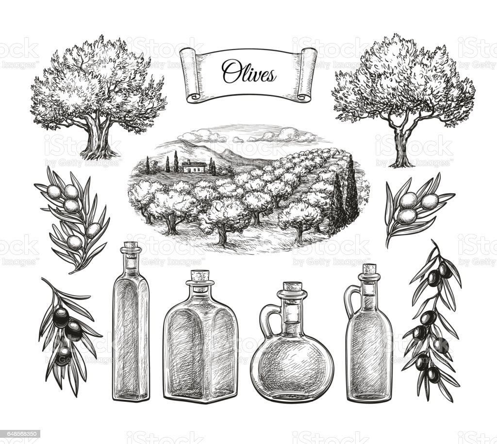 Grand ensemble d'olive. - Illustration vectorielle