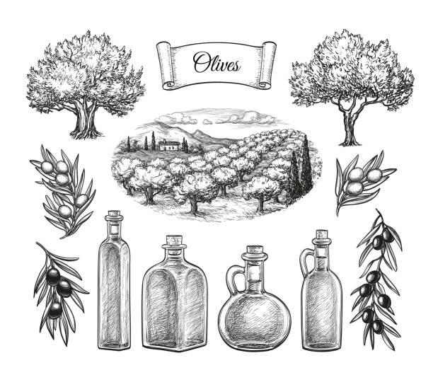 illustrations, cliparts, dessins animés et icônes de grand ensemble d'olive. - cuisine espagnole