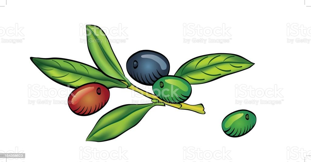 Olive branch isolated on white background royalty-free stock vector art