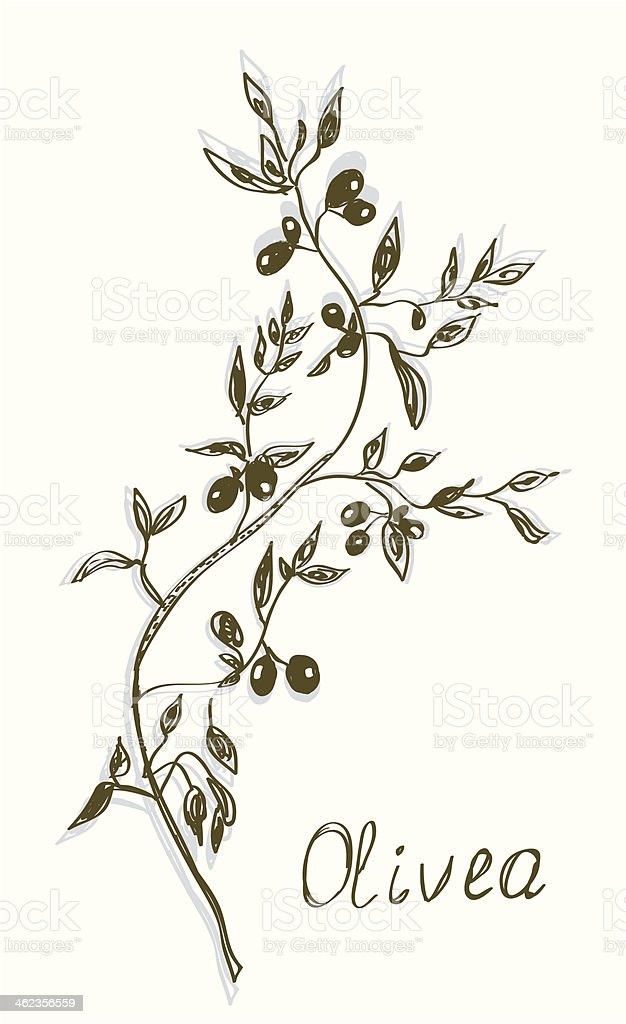 Olive branch painting hand drawn vector art illustration