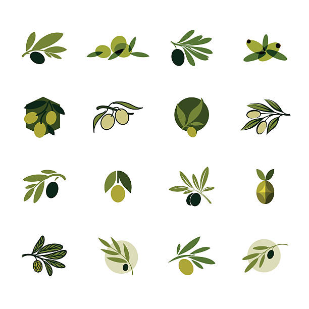 Olive branch. Set of vector design templates and icons Olive branch. Set of vector design templates and icons olives stock illustrations