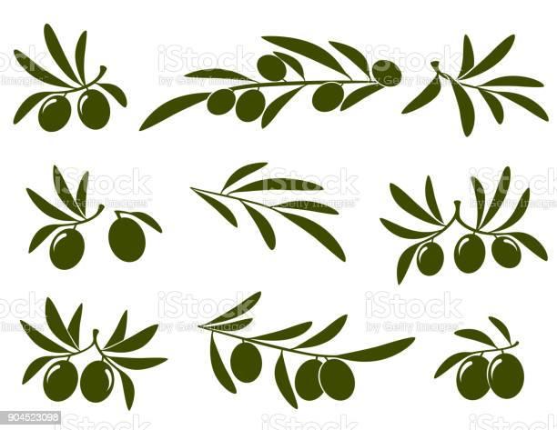 Olive branch set vector id904523098?b=1&k=6&m=904523098&s=612x612&h=qax6xq6vw17xdt0 ap1jk5he1nha9ph0zj9vn8cv8xm=