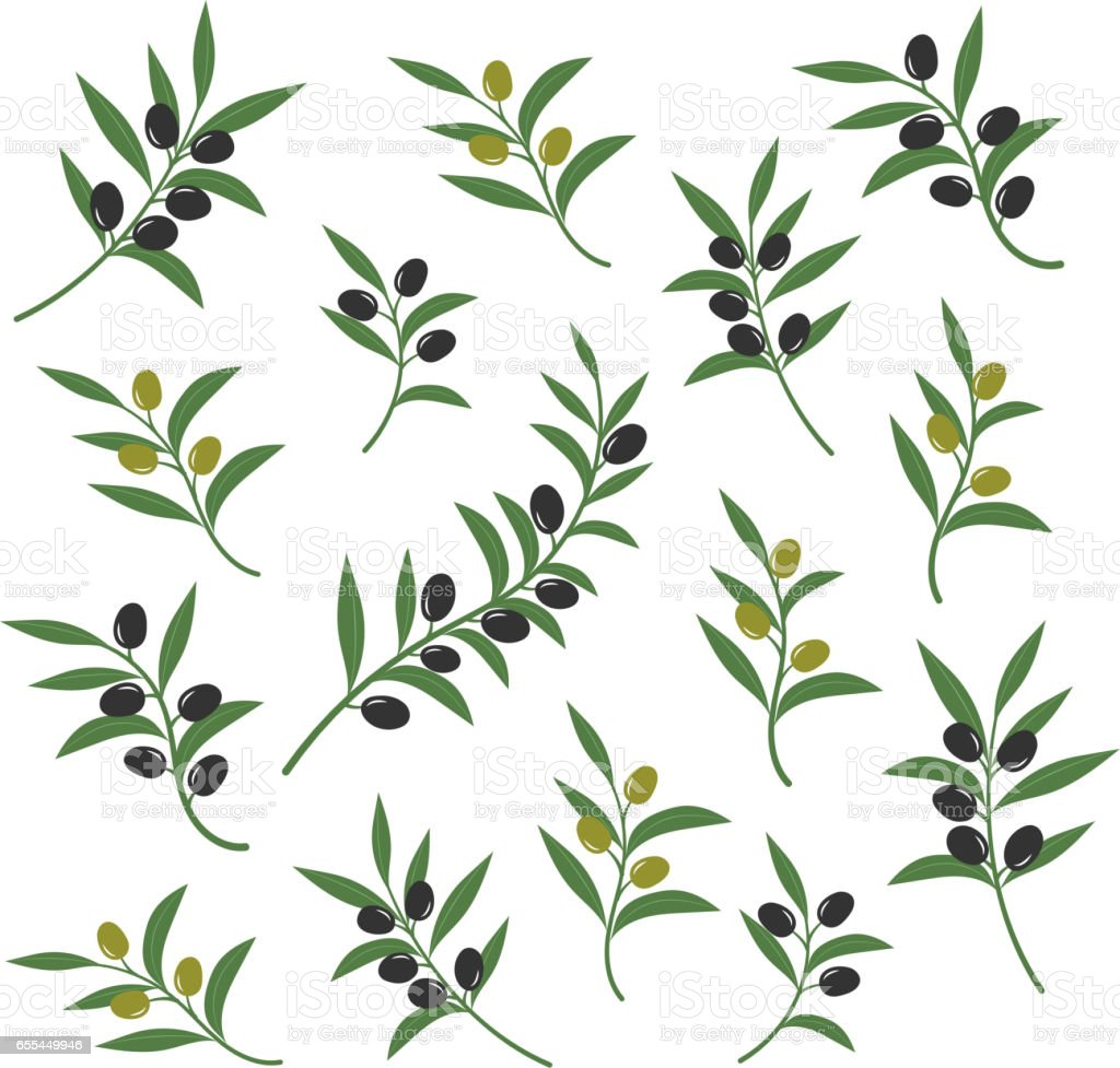 Olive branch set vector illustration. Italian sicilian or greek oil green branches symbols isolated on white background