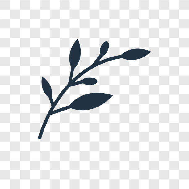 Olive Branch vector icon isolated on transparent background, Olive Branch transparency logo design Olive Branch vector icon isolated on transparent background, Olive Branch transparency logo concept olive branch stock illustrations