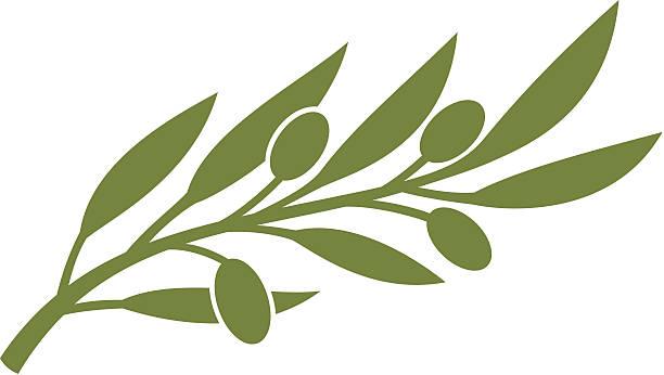 olive branch olive symbol olive branch stock illustrations