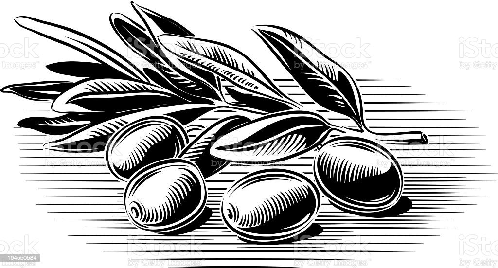 olive branch royalty-free olive branch stock vector art & more images of agriculture