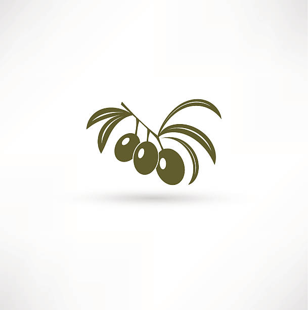 Olive Branch vector art illustration