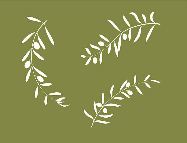 Olive branch Three olive branches with their fruits olive branch stock illustrations