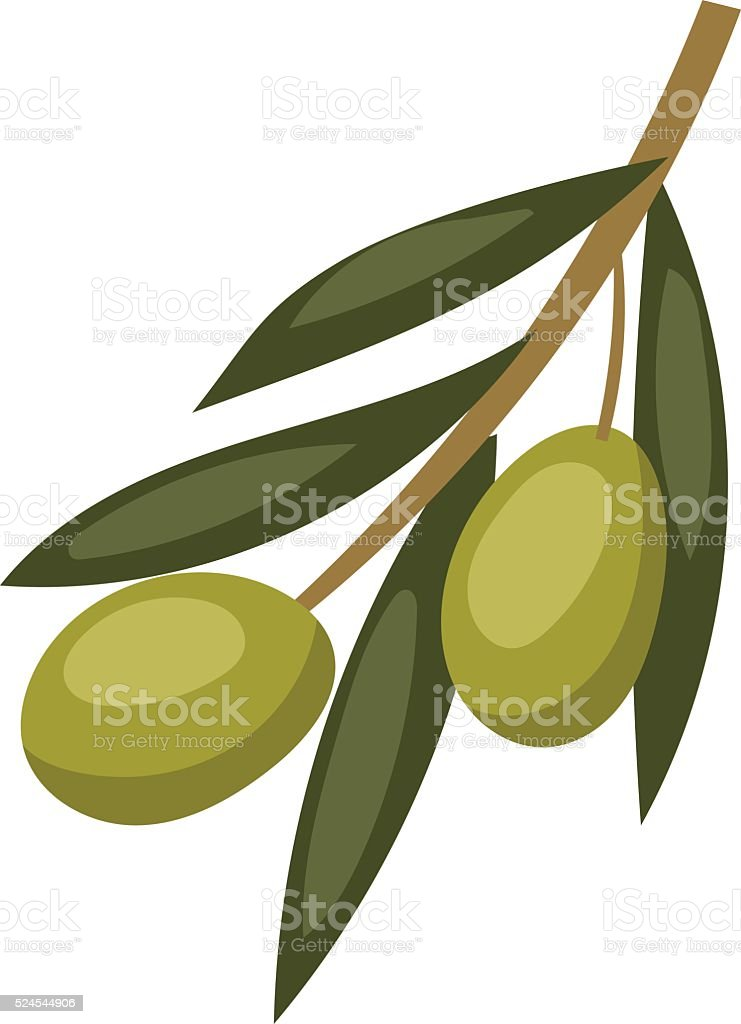Olive branch with green olives on a white background healthy vector art illustration
