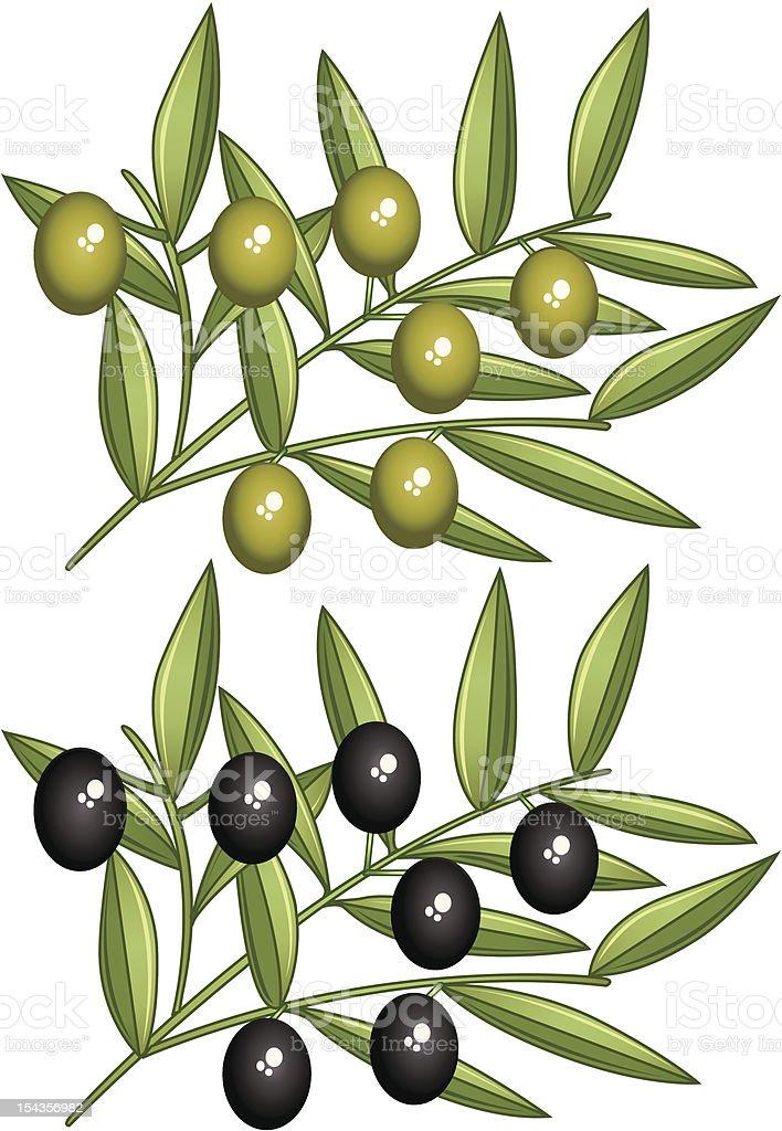 Olive branches vector art illustration