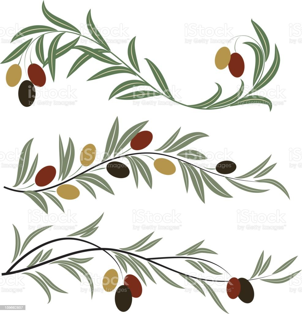 Olive branches royalty-free olive branches stock vector art & more images of antioxidant