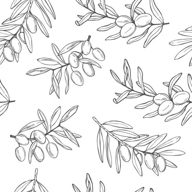 bildbanksillustrationer, clip art samt tecknat material och ikoner med oliv. grenar med frukter. vektor mönster. - vegetarian